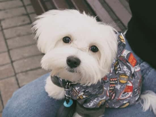 avoid fashion items so you can save money on pets